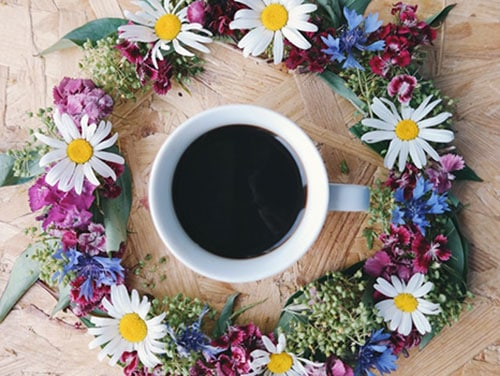tastes of kona coffees