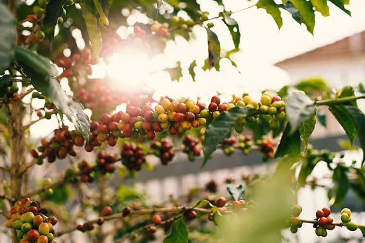 environmentally-friendly-coffee