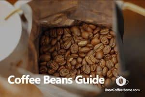 coffee-bean-guide-featured-social