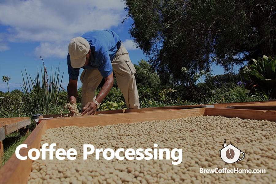 coffee-processing-methods-featured-image