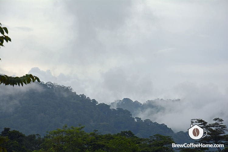 humid-and-foggy-moutain