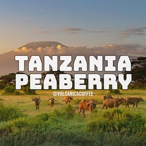 tanzania-peaberry