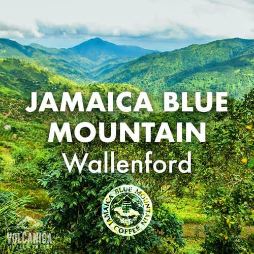 wallenford-Volcanica