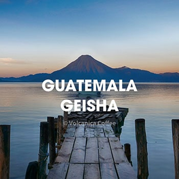 guatemala-geisha-coffee-volcanica