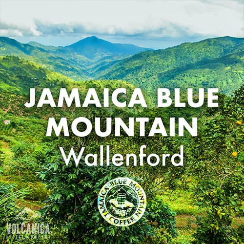 jamaica-blue-mountain-volcanica